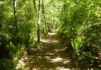 Bridle State Park Walking trails